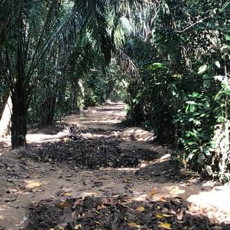 Tambopata walking trial